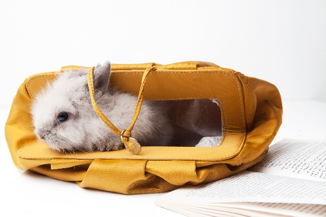 header_rabbit_in_bag